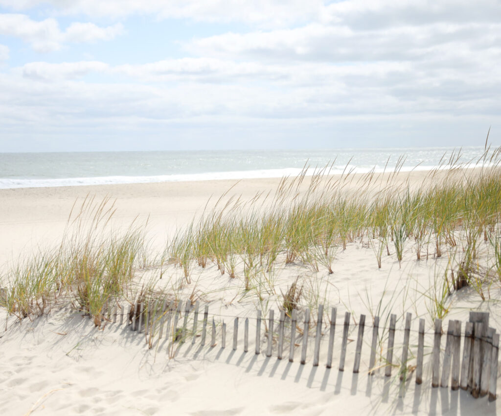 photo of a sand dune along the ocean